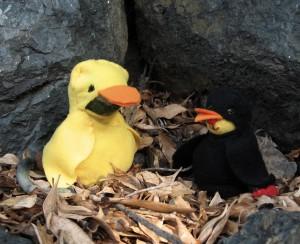 large_birdcostume