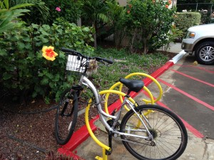This our bicycle that got us to all the beaches. This flower is bigger than our mom's hand!