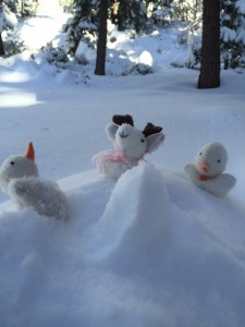 Mia's Poekies, Raspberry, Snowie, and Blizzard in Tahoe!