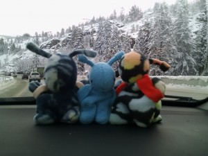 Catie and Gracie took their Poekies for their first trip in the snow